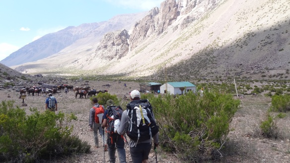 We finally reach camp just after the mules do.