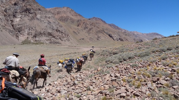 The mules overtake us of course and we end up about half an hour behind them into camp.